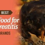 10-Best-Dog-Food-for-Pancreatitis-UK-Brands