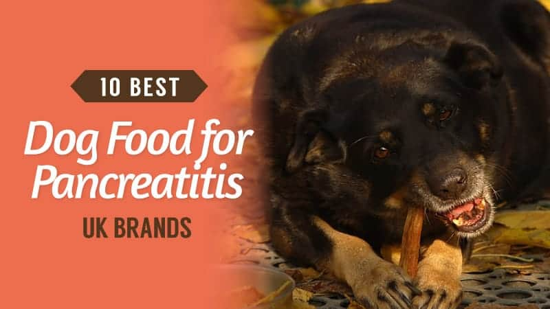 10-Best-Dog-Food-for-Pancreatitis-UK-Brands