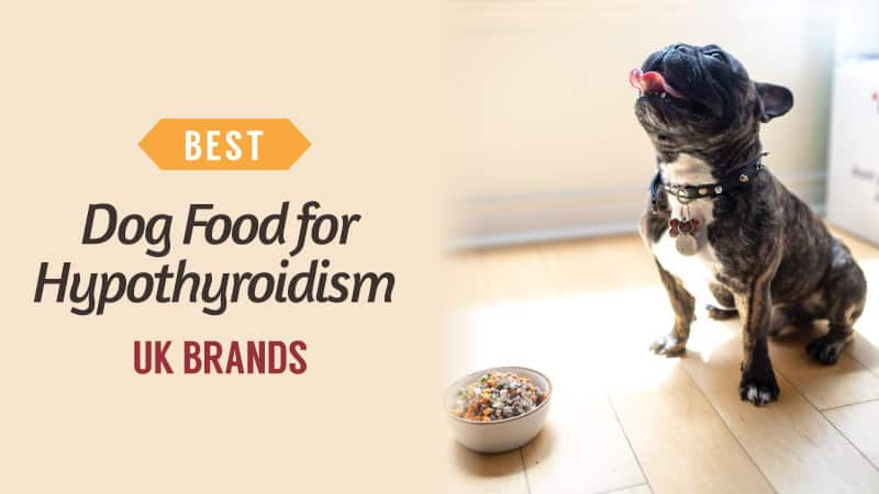 Best-Dog-Food-for-Hypothyroidism-UK-Brands