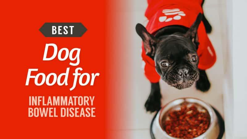 Best-Dog-Food-for-Inflammatory-Bowel-Disease