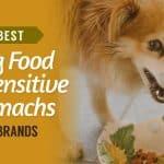 Best-Dog-Food-for-Sensitive-Stomachs-UK-Brands