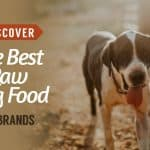Discover-The-Best-Raw-Dog-Food-UK-Brands