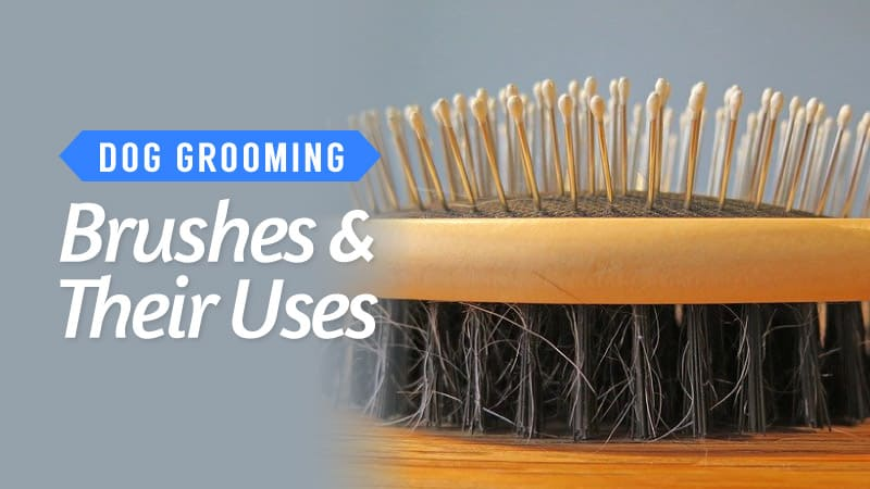 Dog Grooming Brushes and their uses