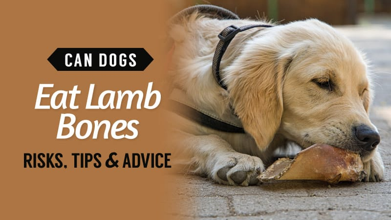 Can-Dogs-Eat-Lamb-Bones-Risks-Tips-Advice
