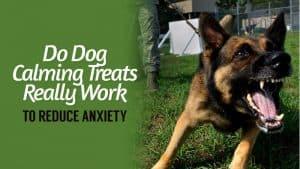 Do-Dog-Calming-Treats-Really-Work-to-Reduce-Anxiety