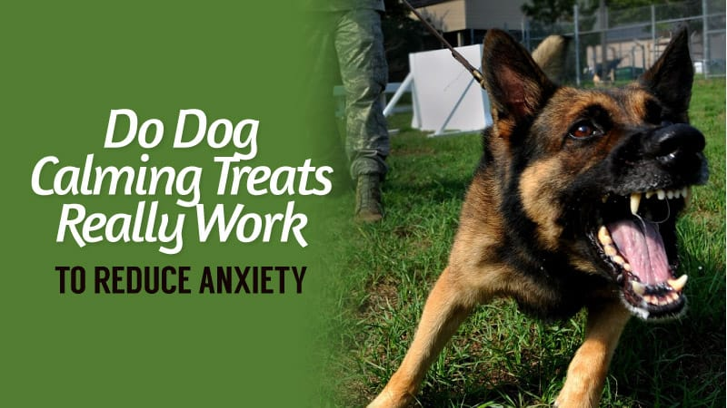Do-Dog-Calming-Treats-Really-Work-to-Reduce-Anxiety