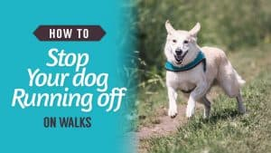 How-to-stop-your-dog-running-off-on-walks