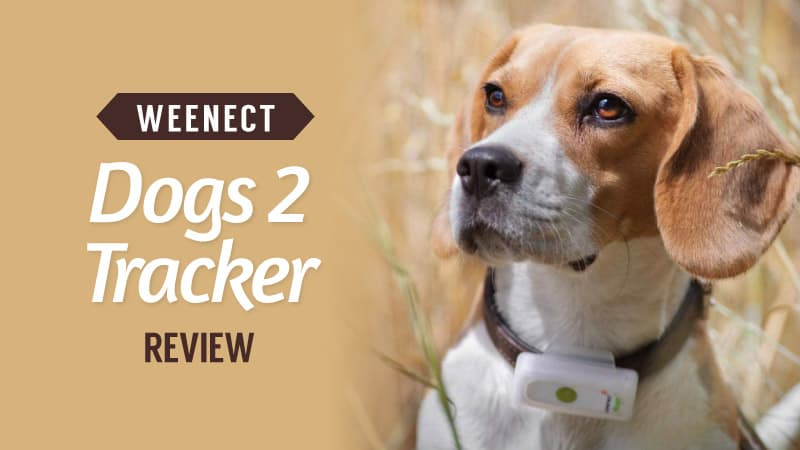 Weenect-Dogs-2-Tracker-Review