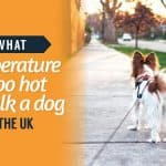what-temperature-is-too-hot-to-walk-a-dog-in-the-uk