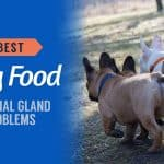 Best-Dog-Food-for-Anal-Gland-Problems