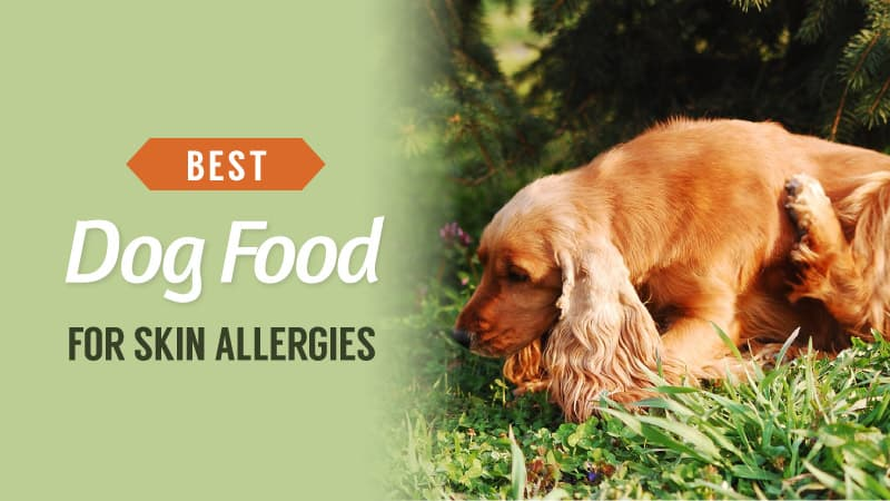 Best-Dog-Food-for-Skin-Allergies