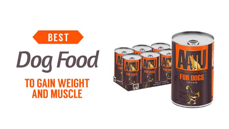best-dog-food-to-gain-weight-and-muscle