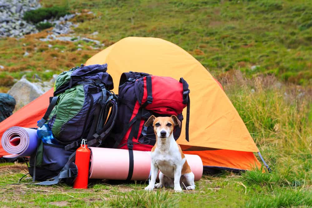 Best Gear and products for Dogs