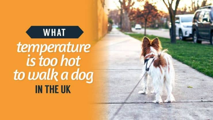 What Temperature Is Too Hot To Walk A Dog In The UK