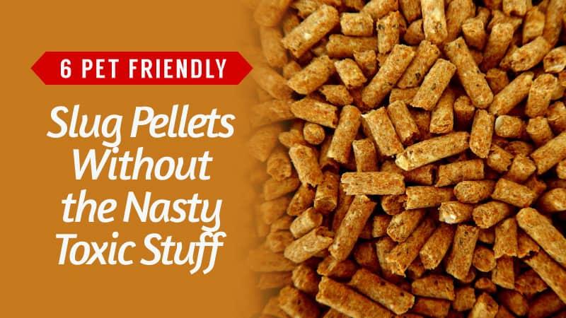 6-Pet-Friendly-Slug-Pellets-Without-the-Nasty-Toxic-Stuff