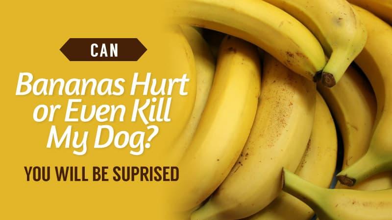 Can-Bananas-Hurt-or-Even-Kill-My-Dog