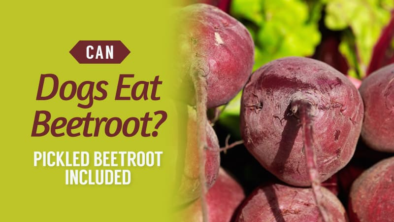 Can-Dogs-Eat-Beetroot-Pickled-Beetroot-Included