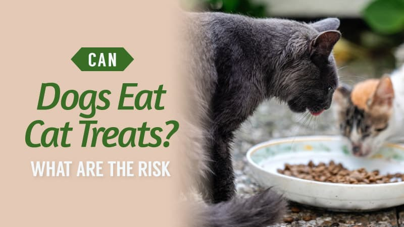 Can-Dogs-Eat-Cat-Treats-What-Are-The-Risk