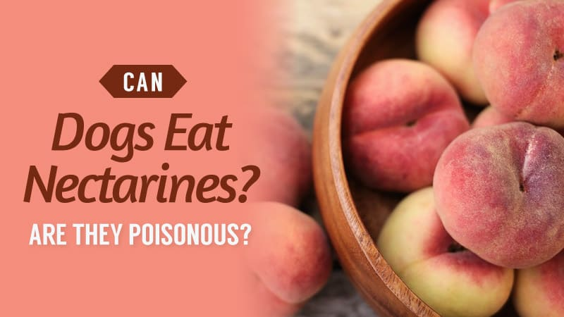 Can-Dogs-Eat-Nectarines-Are-They-Poisonous