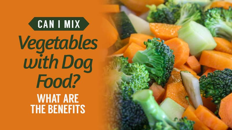 Can-I-Mix-Vegetables-With-Dog-Food-What-Are-The-Benefits