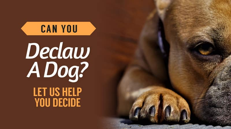 Can-You-Declaw-A-Dog-Let-Us-Help-You-Decide