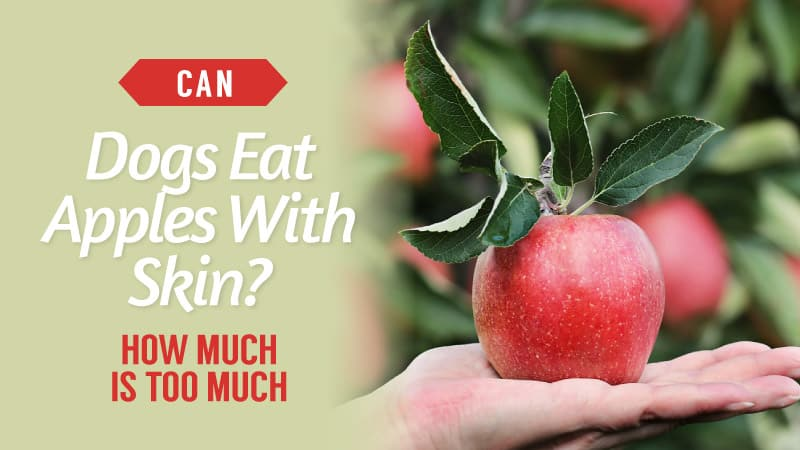 Can-dogs-eat-apples-with-skin-How-Much-Is-Too-Much