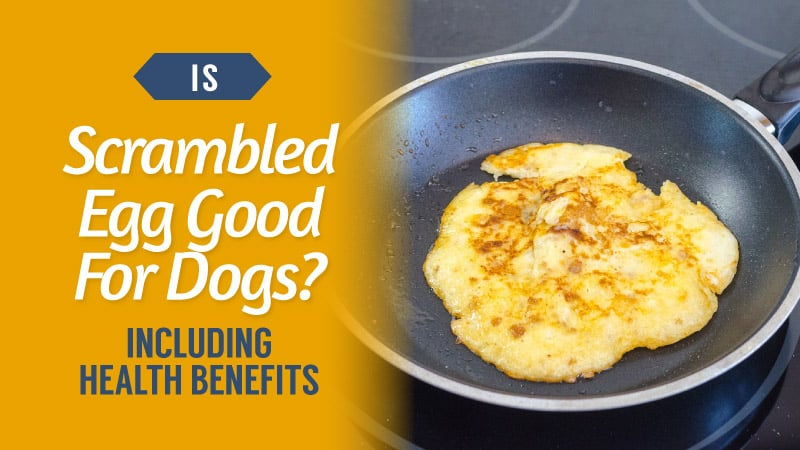 Is-Scrambled-Egg-Good-For-Dogs-Including-Health-Benefits