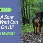 My-Dog-Has-A-Sore-Bum-What-Can-I-put-On-It