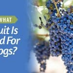 What-Fruit-Is-Bad-For-Dogs