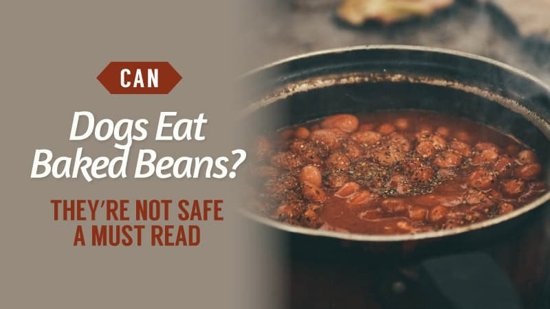 Can-Dogs-Eat-Baked-Beans-Theyre-Not-Safe-A-MUST-read