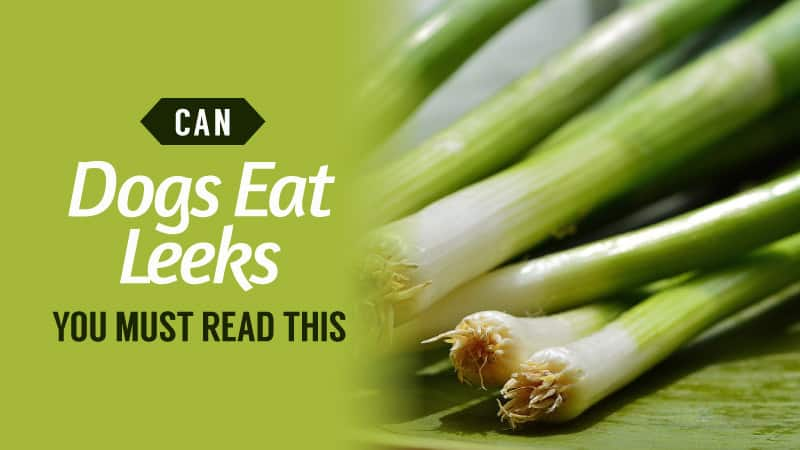 Can-Dogs-Eat-Leeks-You-MUST