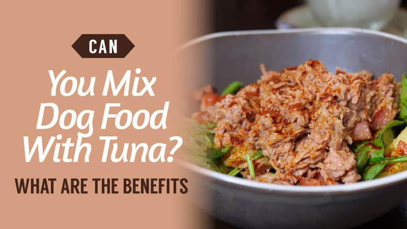 Can-You-Mix-Dog-Food-With-Tuna-What-Are-The-Benefits