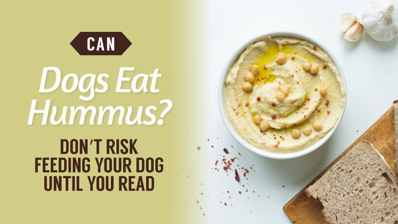 Can-Dogs-Eat-Hummus-Don't-RISK-Feeding-Your-Dog-Until-You-Read