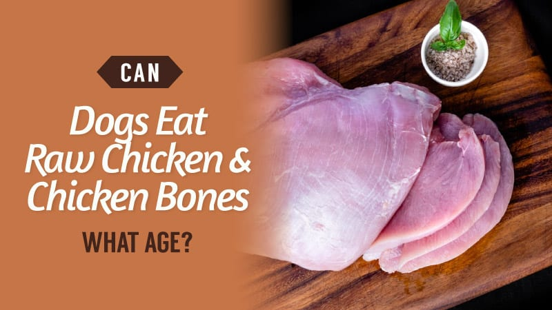 Can-Dogs-Eat-Raw-Chicken-and-Chicken-Bones-What-Age