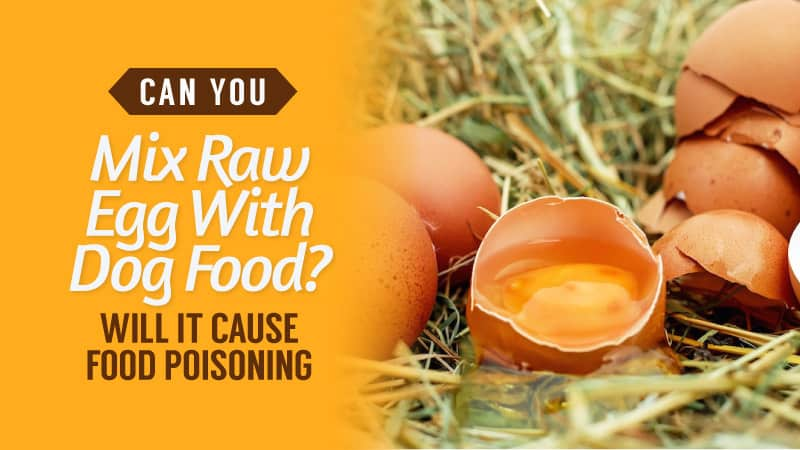 Can-You-Mix-Raw-Egg-With-Dog-Food-Will-it-Cause-Food-Poisoning